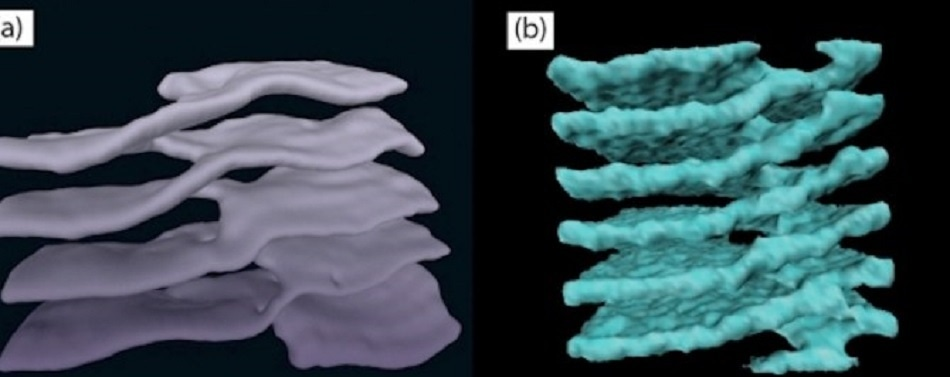 Physicists Work Together to Confirm Structural Similarity in Human Cells and Neutron Stars