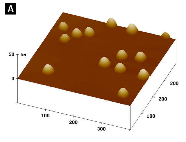 Atomic force microscope image of InAs self-assembled quantum dots on a GaAs surface.