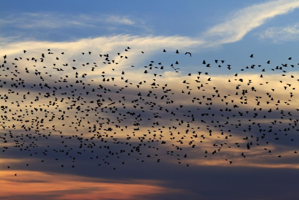 magnetic fields, bird navigation, protein, cryptochrome 4