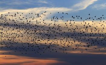 Bird Navigation: Quantum Physics in Biological Processes?